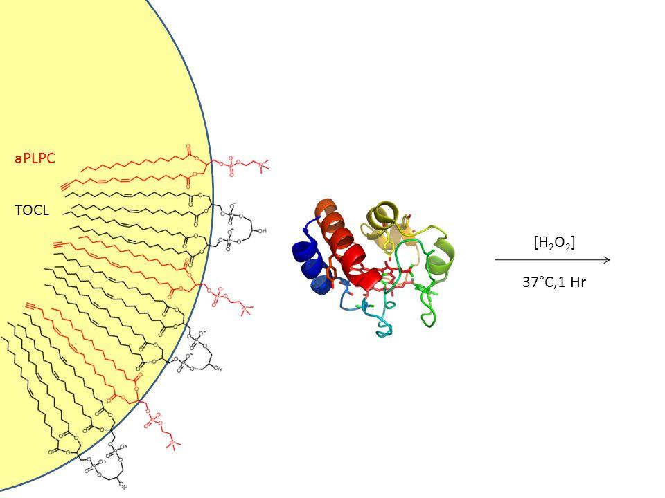 aPLPC TOCL [H2O2] 37°C,1 Hr